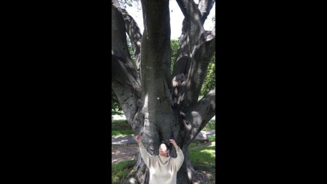 Mojo Monday 5: Dancing with Trees
